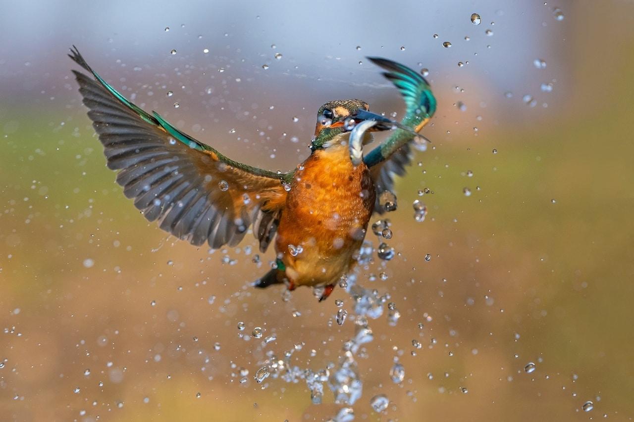 Fotografiranje ptica